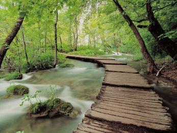 green-natural-scenes-31