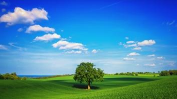 natural_green_wallpaper_beautifull